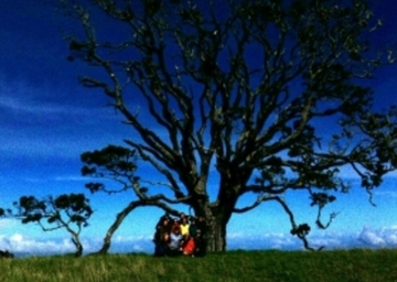 Thumb hlh mother tree 340x254